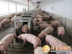 两部门发布2020惠农政策:对动物疫病强制扑杀给予补助