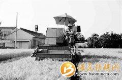 陕西7个小麦新品获农业农村部审定 杨凌占据6席