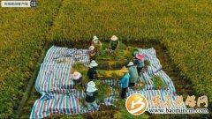 袁隆平超级稻蒙自基地连续四年百亩片平均亩产超1100千